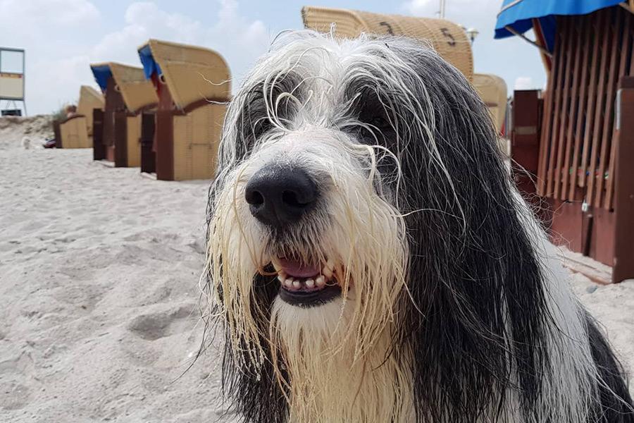 Hundestrand Grömitz