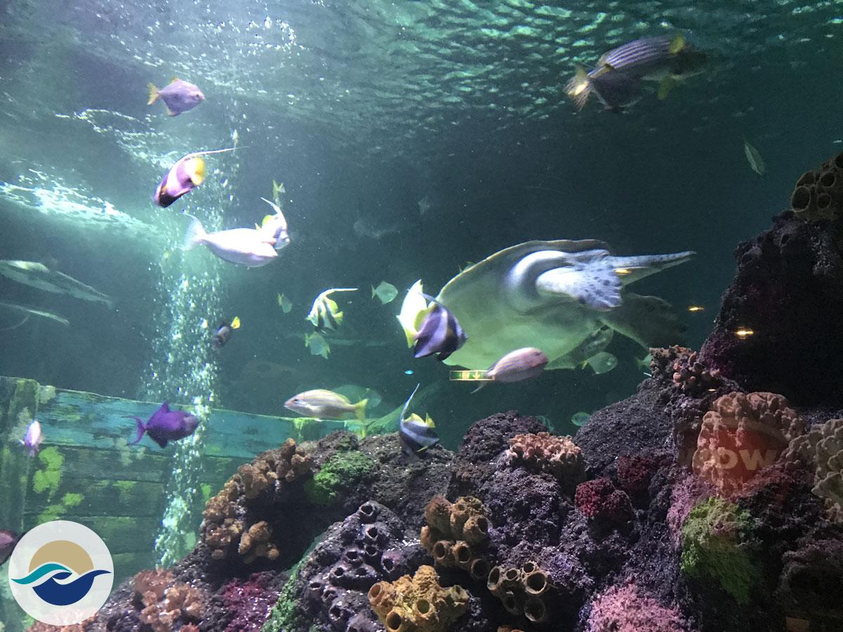 Einzigartig in Norddeutschland bietet das Großaquarium mit tausenden von Lebewesen einen umfangreichen Querschnitt durch den Artenreichtum der nordeuropäischen und tropischen Gewässer.