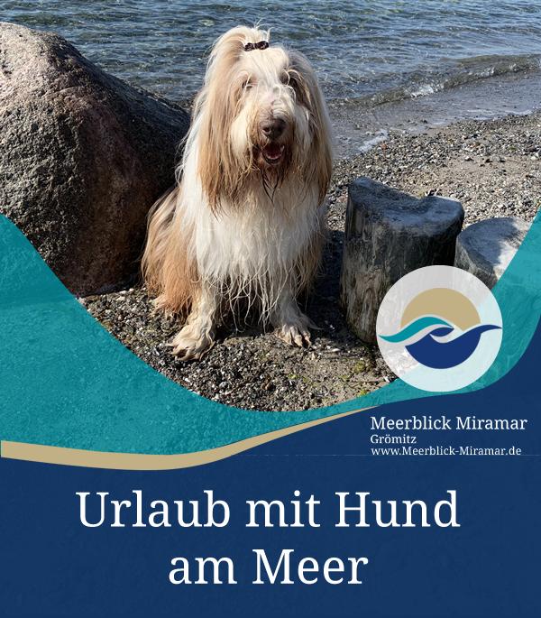 Urlaub mit Hund in Grömitz
